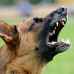 Agressive Tiere