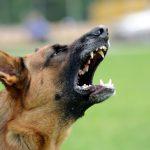 Agressiven Hund mit Pfefferspray abwehren